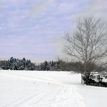 A Snowy Fredericton