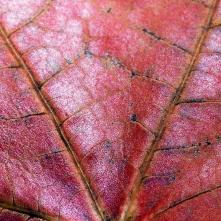 Leaf 1
