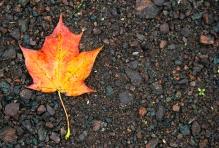 leaf rain 1