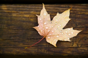 leaf rain 4