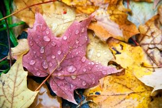 leaf rain 5