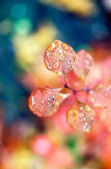 Rainy Leaf 1