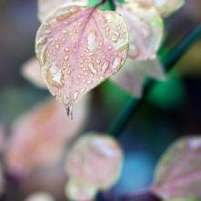 Rainy Leaf 2