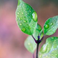 Rainy Leaf 3