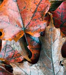 Rainy Leaf 6