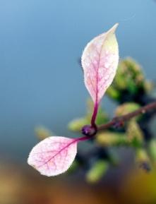Rainy Leaf 8